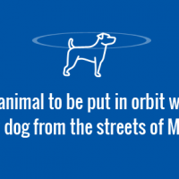 The first animal to be put in orbit was, Laika, a stray dog from the streets of Moscow.