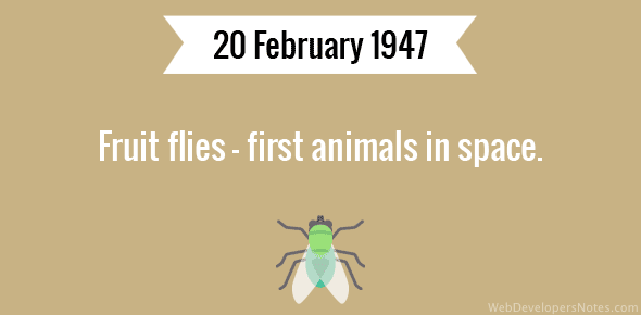 Fruit flies - first animals in space.