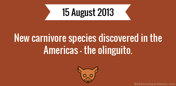 New carnivore species discovered in the Americas - the olinguito.