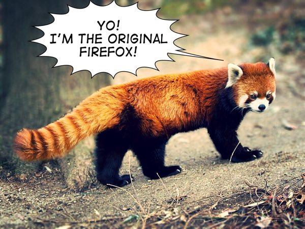The Red Panda - Firefox is named after this mammal
